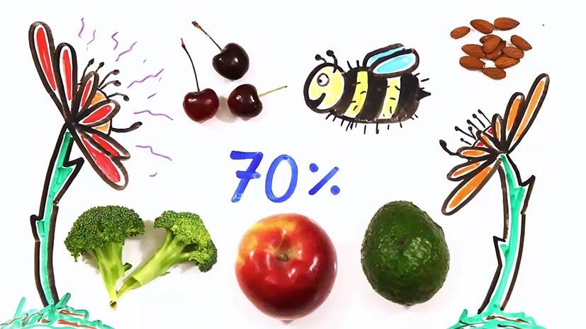 اگر همه زنبورها از بین بروند، چه اتفاقی میافتد؟