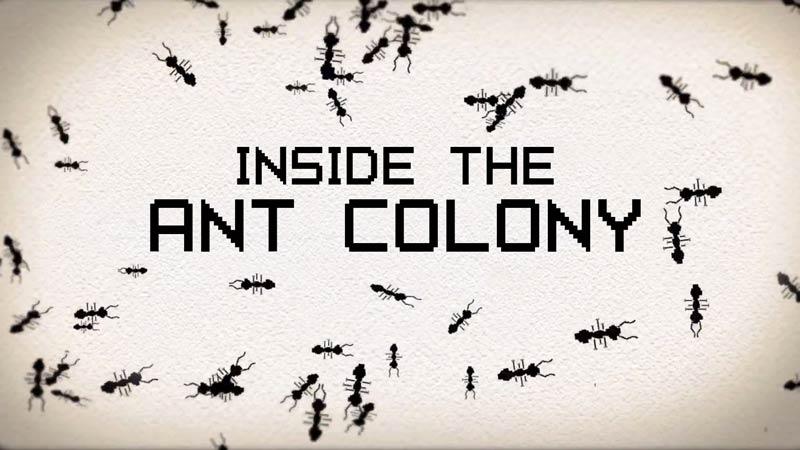 درون کلونی مورچهها