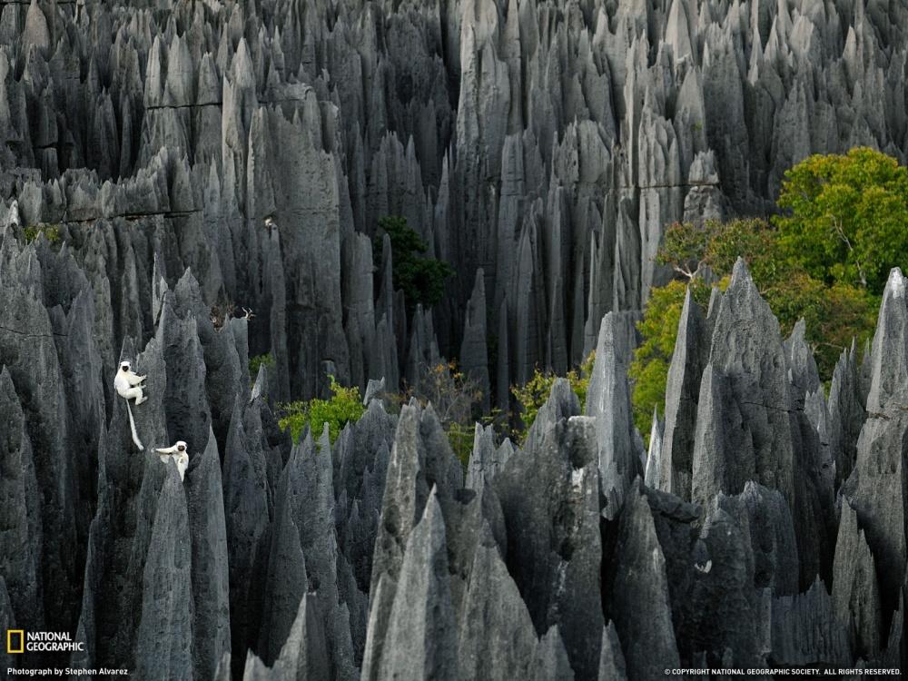 جنگل سنگی سینگی دو بماراها، ماداگاسکار