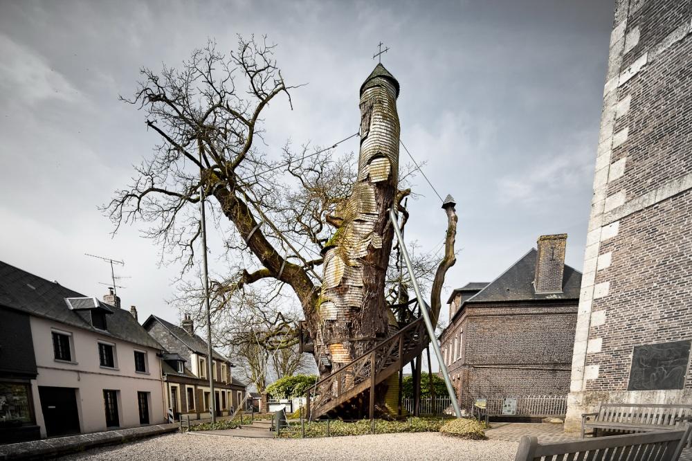 درخت بلوط هزار با یک کلیسای کوچک در درونش،فرانسه