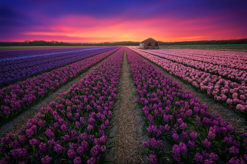 کشوری با گل های بی نهایت