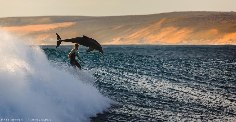 موج سوار و دلفین