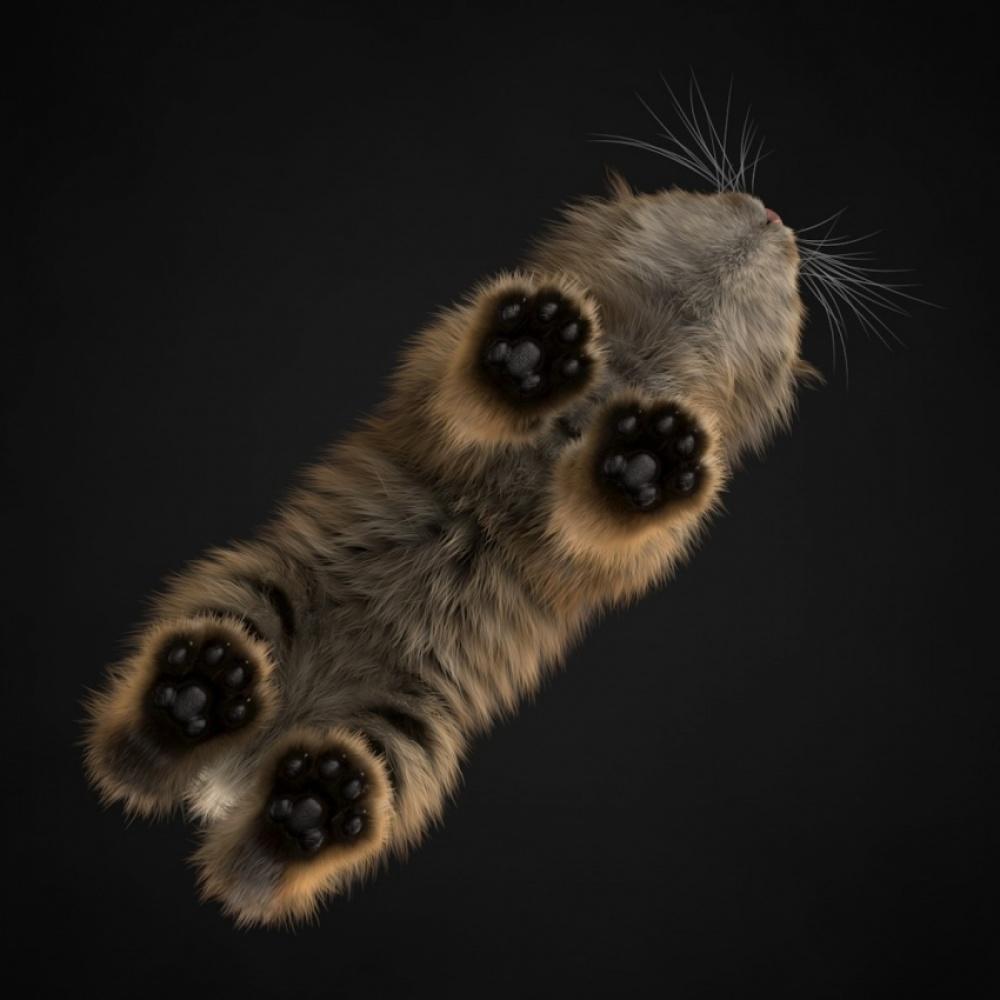تصویر از پایین، گربه