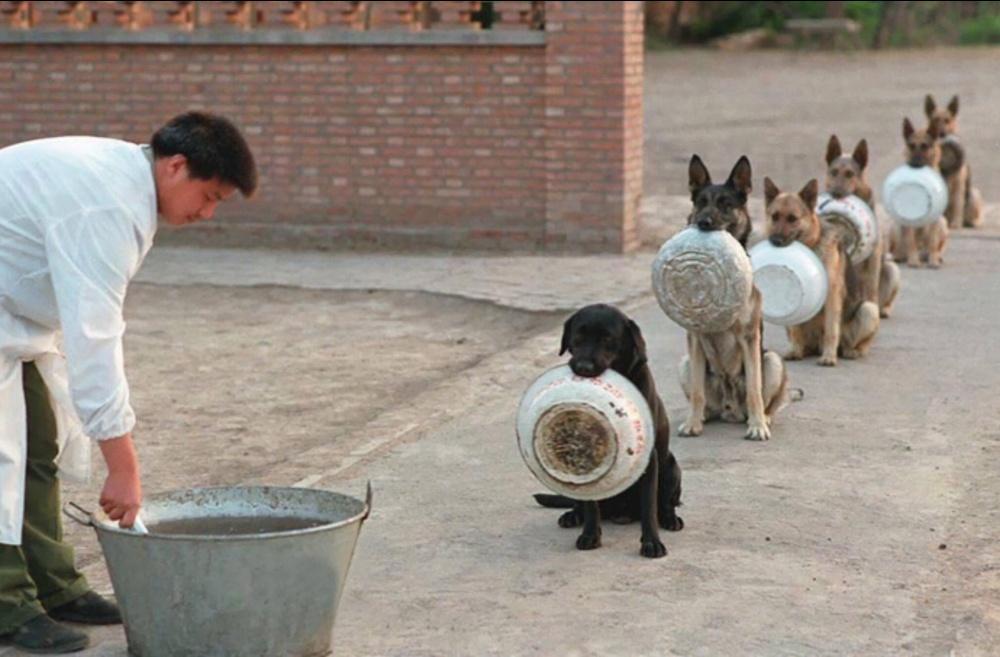 سگ های پلیس در صف نهار چین