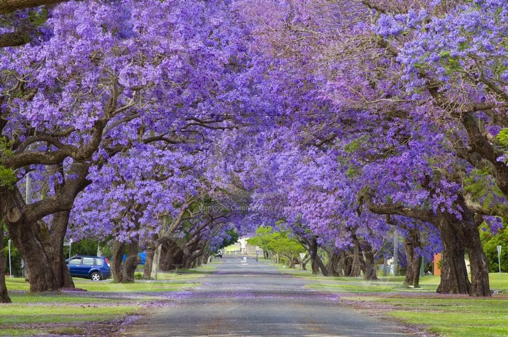 گرافتن، استرالیا