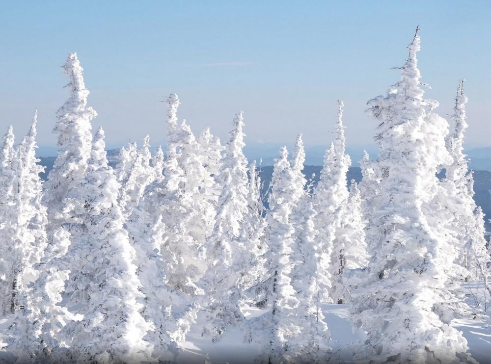 جنگلی نزدیک به دهکدهی شریگیئش، منطقه ی کمرو،روسیه