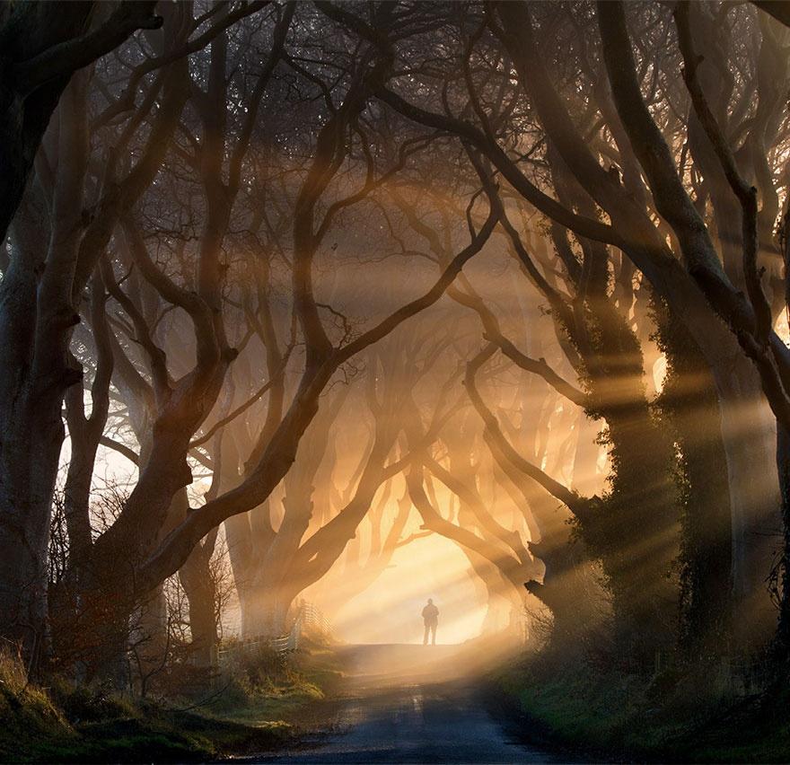 خیابانی از درختان راش، ایرلند شمالی