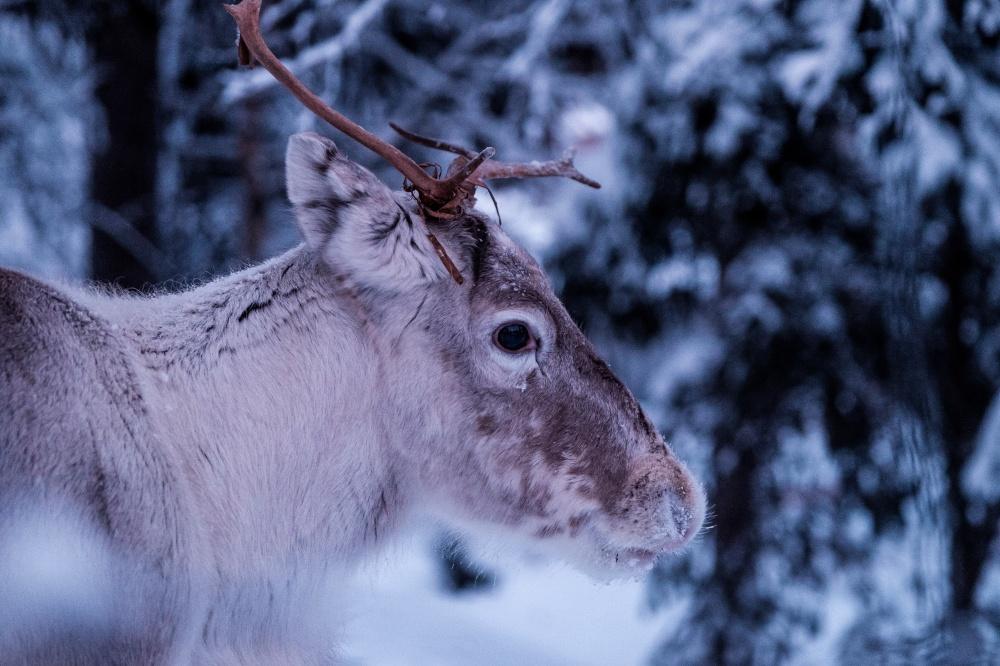 مقام پنجم-فنلاند