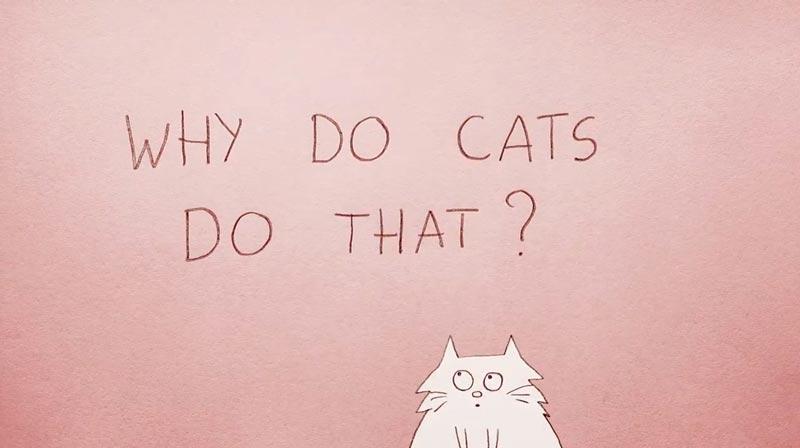 چرا گربهها این قدر عجیب رفتار میکنند؟