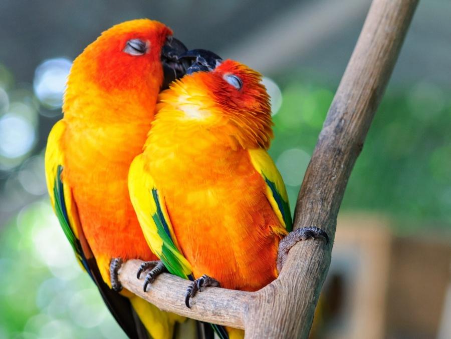 عشق در میان حیوانات