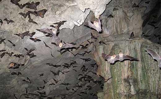 دهلران(غارخفاش)