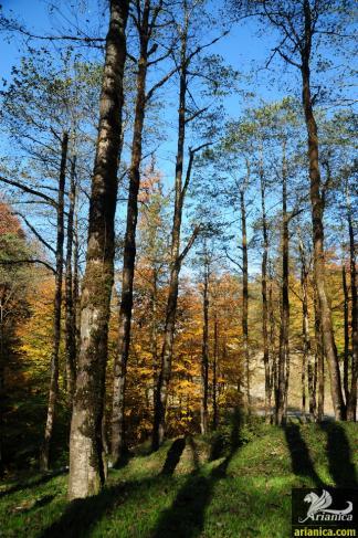پارک جنگلی خشکه داران