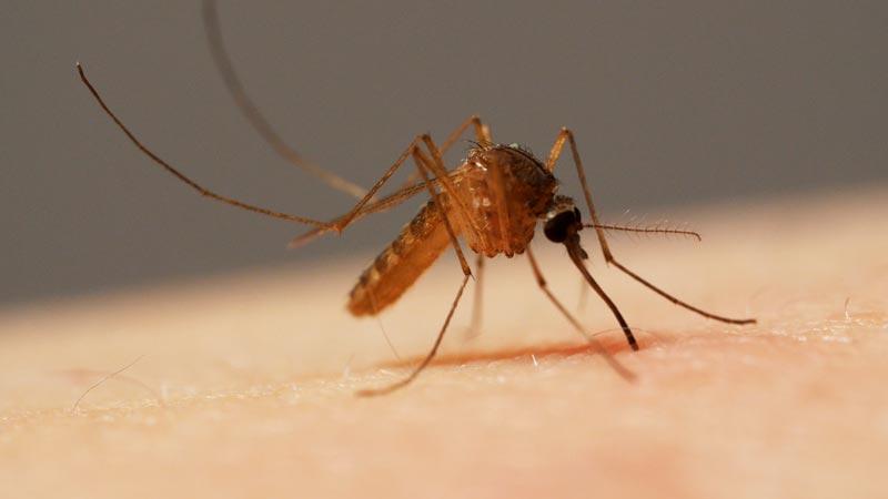 چگونه پشهها با استفاده از شش سوزن خون شما را میمکند؟