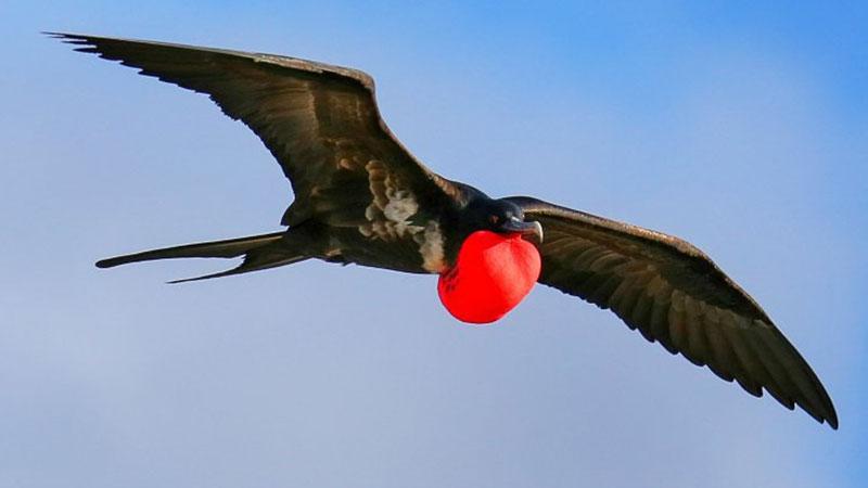 ثبت یک پدیده شگفتانگیز؛ پرندگان در طول پرواز میخوابند