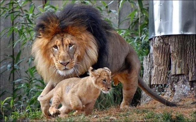 2 - عصبانی شدن پدر