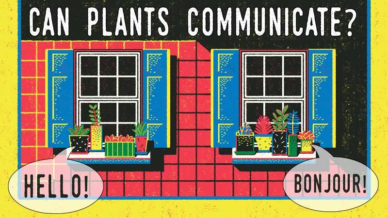 آیا گیاهان میتوانند با هم صحبت کنند؟