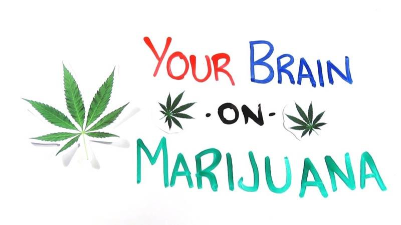تاثیر ماریجوآنا بر مغز