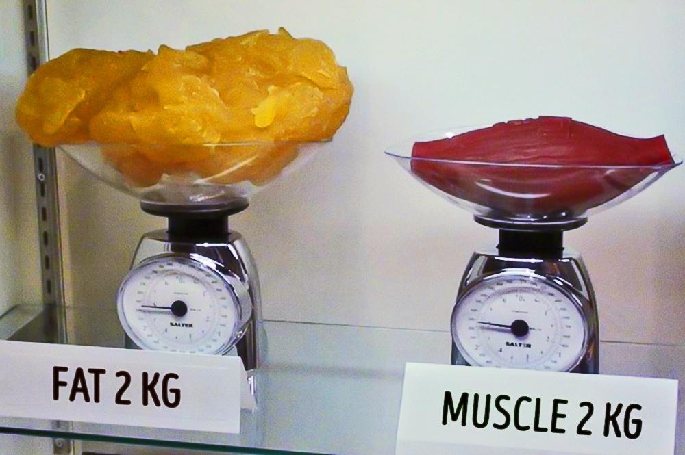 2 کیلوگرم چربی در مقایسه با دو کیلوگرم ماهیچه