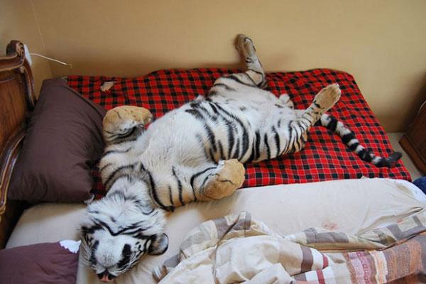 چگونه سریعتر بخوابم؟