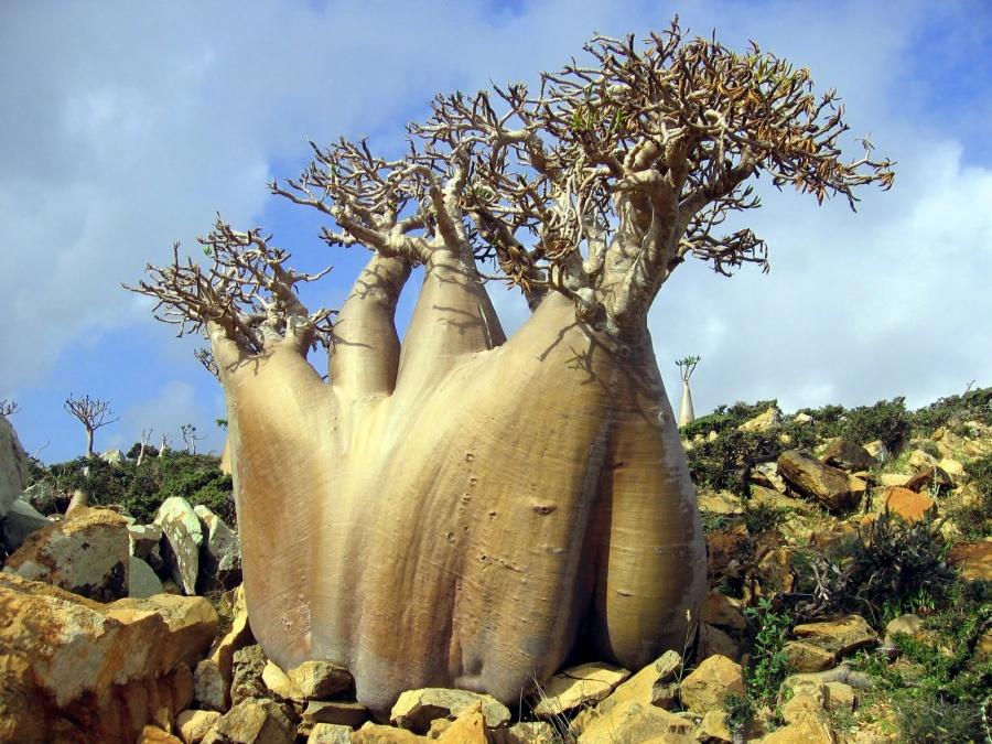 مجمعالجزایرسوکوترا، یمن