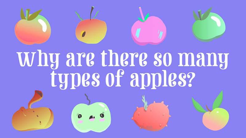 چرا انواع زیادی سیب وجود دارد؟