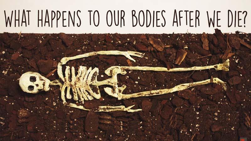 بعد از مرگ چه اتفاقی برای بدن ما میافتد؟!