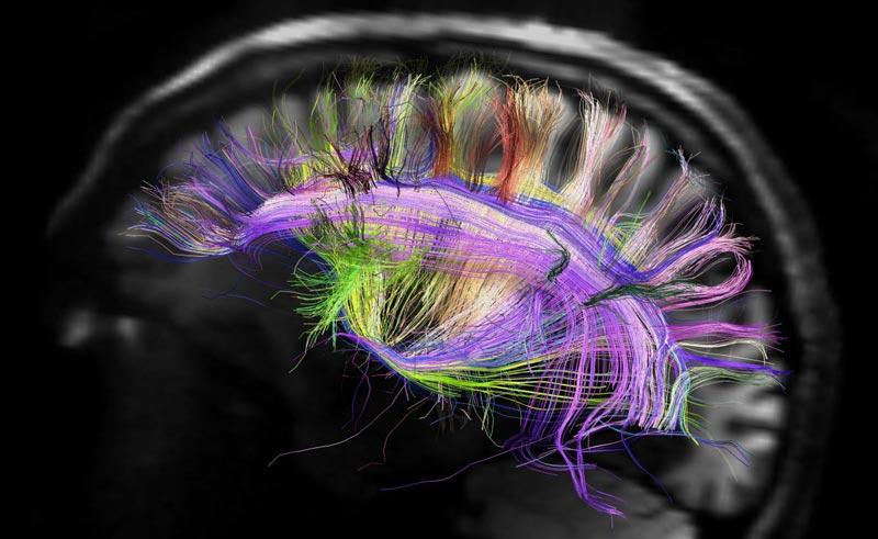 اطلاعات مفید و جالب در مورد مغز انسان