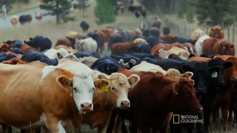 گوشت قرمز و تاثیر آن در نابودی جنگلها
