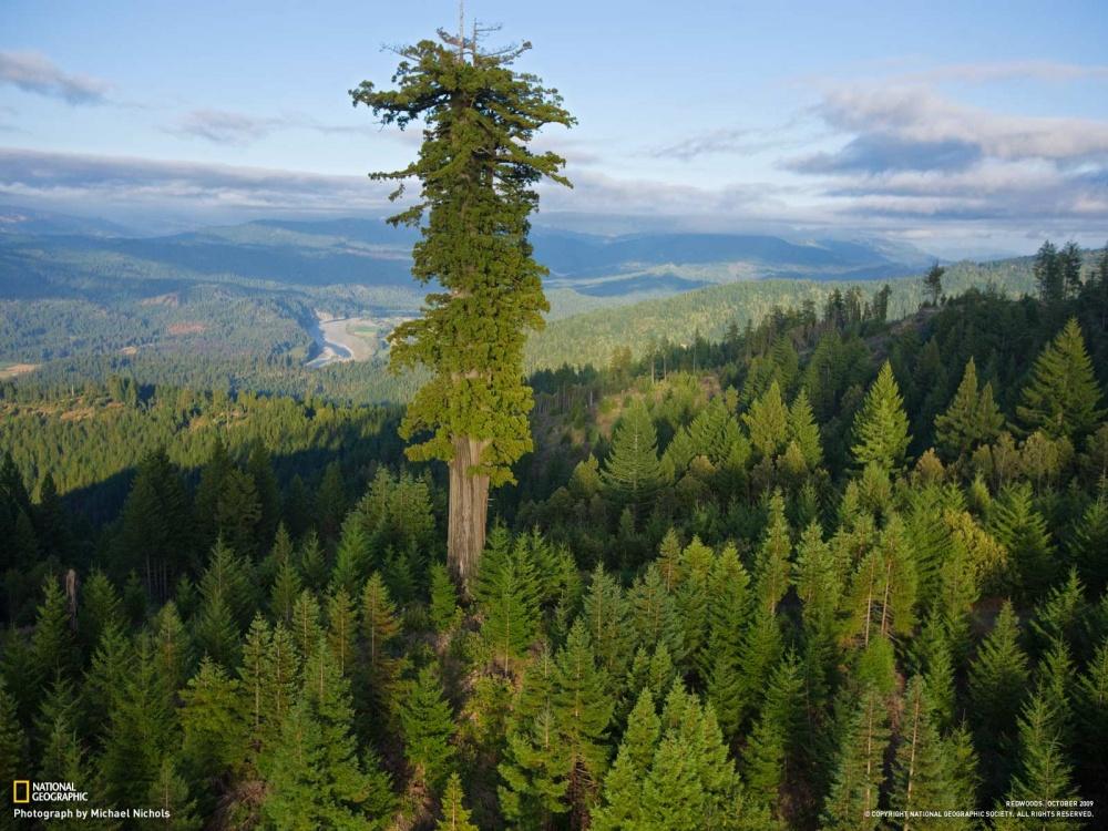 درخت تیتان پدر هلیوس