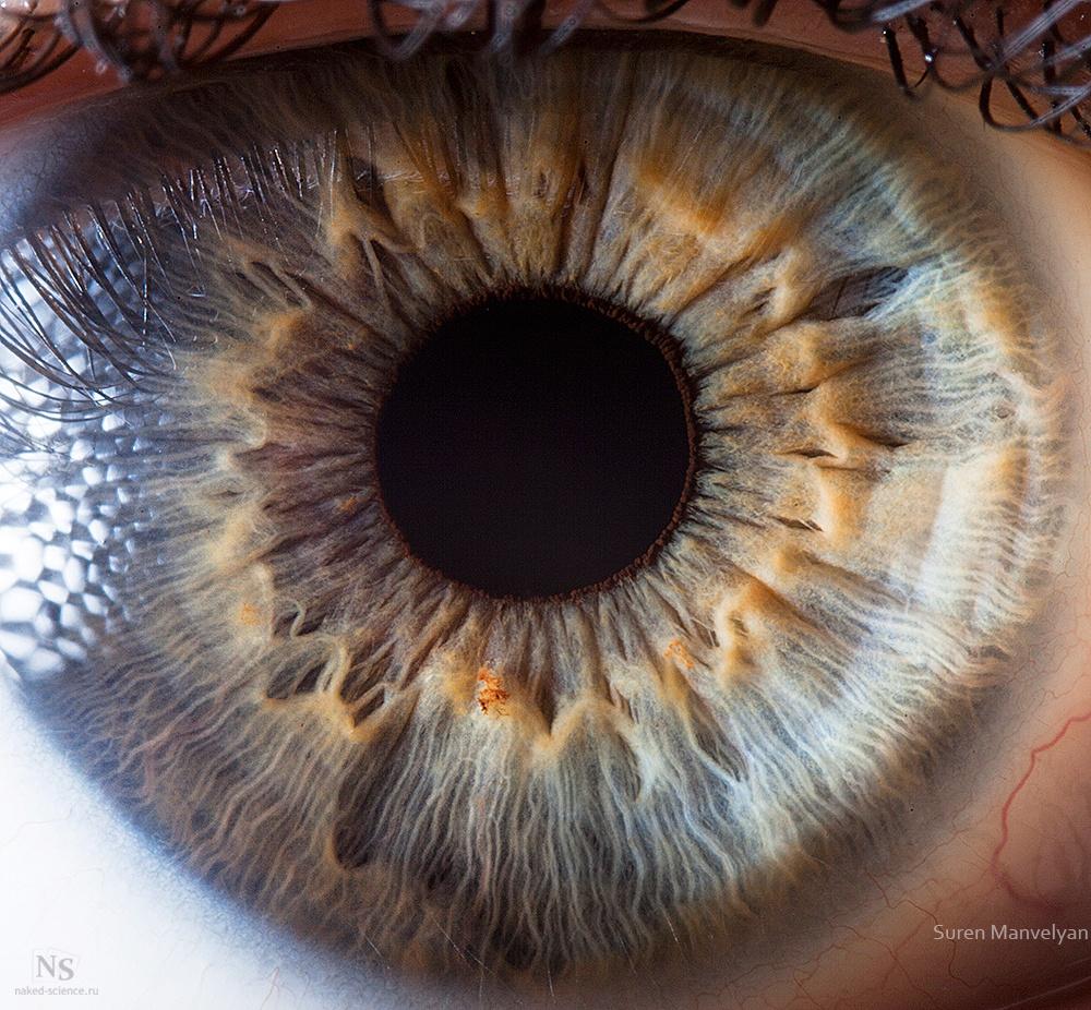 نمای نزدیک از چشم انسان