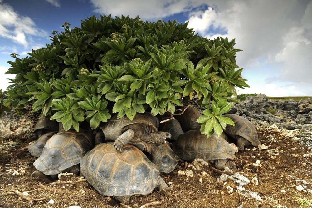 لاکپشتها