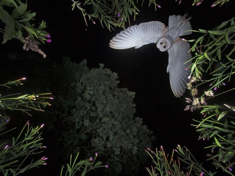 شبحی در شب