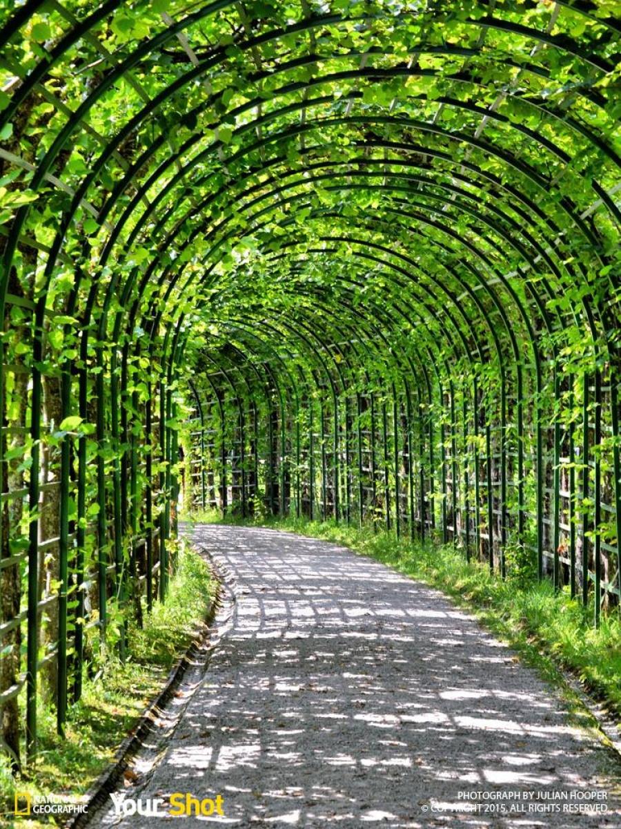 یک تونل زنده