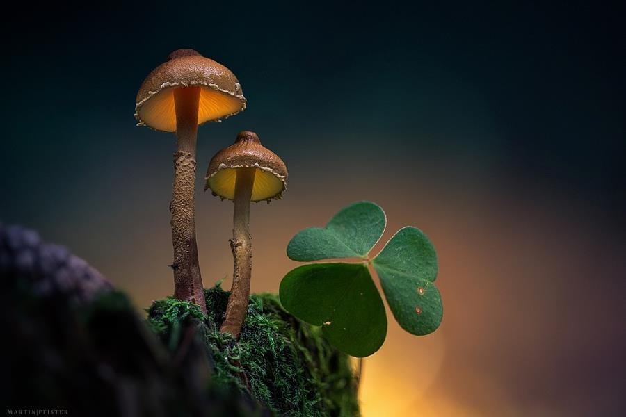 دنیای گیاهان