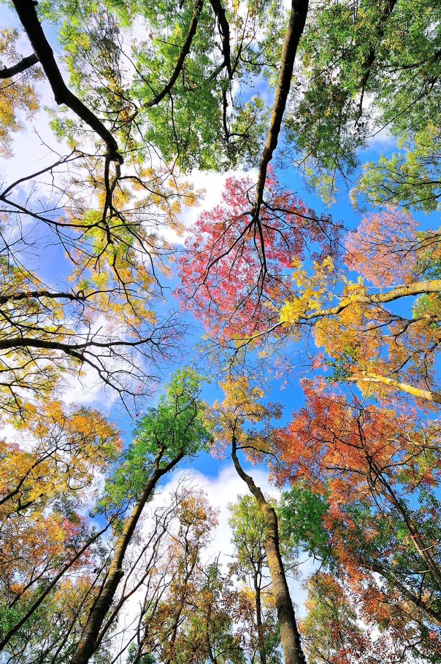 رنگهای پاییزی
