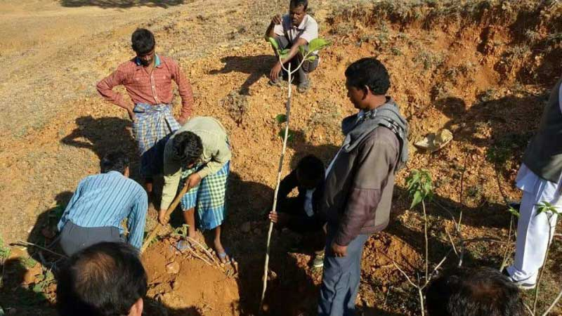 بهجای پرداخت شهریه، درخت بکارید