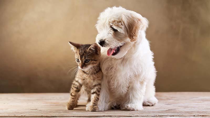 اثرات زندگی با حيوانات خانگی