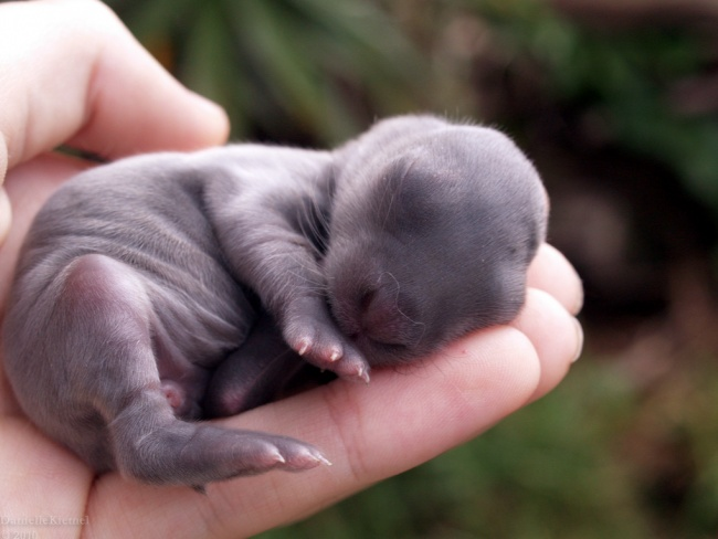 A baby rabbit