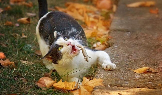 گربه جان، من اصلا گزینه خوبی برای خورده شدن نیستم