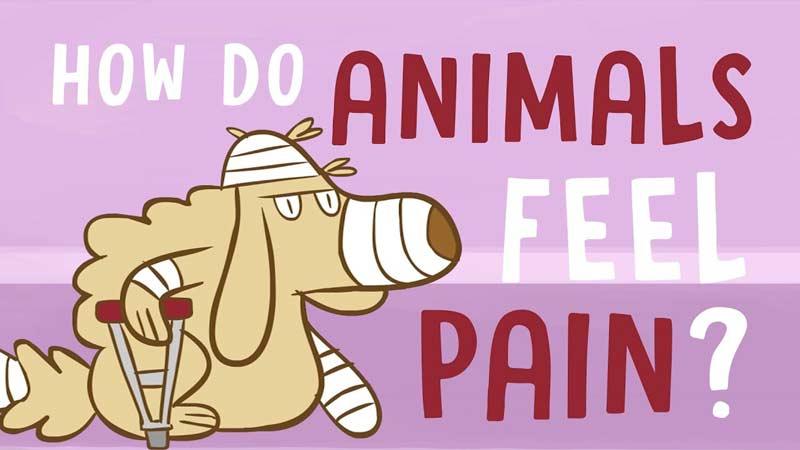 حیوانات چگونه درد را تجربه میکنند؟