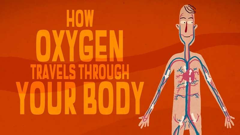 سفر شگفت انگیز اکسیژن در بدن