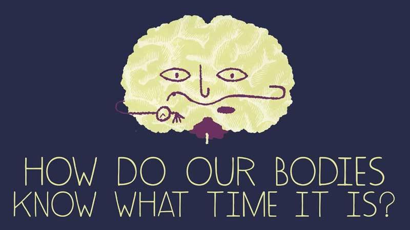 بدن شما چهطور متوجه زمان میشود؟